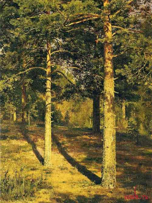 Картина И.И. Шишкина «Сосны, освещенные солнцем»