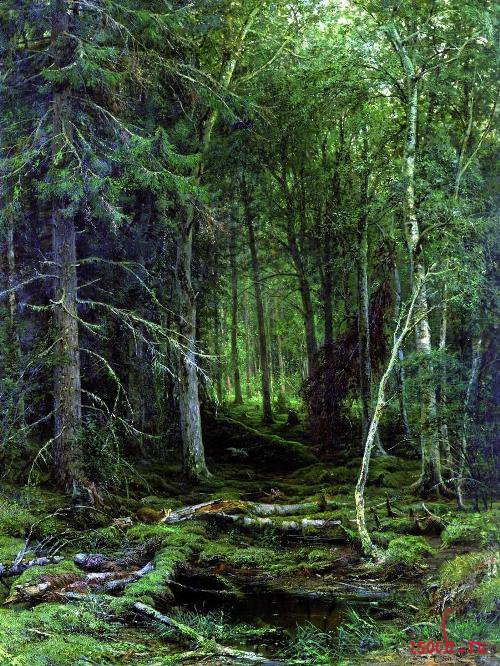 Картина И.И. Шишкина «Лесная глушь»